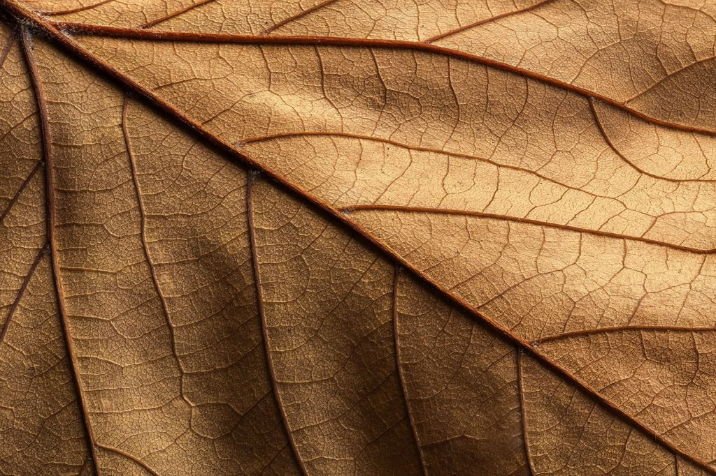 Brown leaf Justin Garner 1000x800
